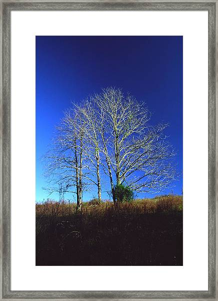 Blue Tree In Tennessee Framed Print