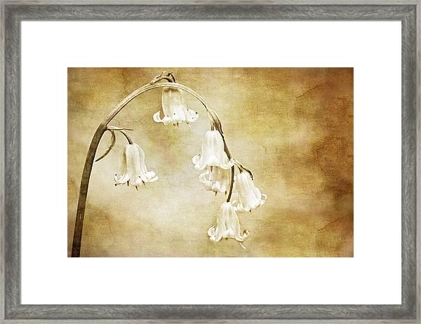 Bluebell Arch Framed Print