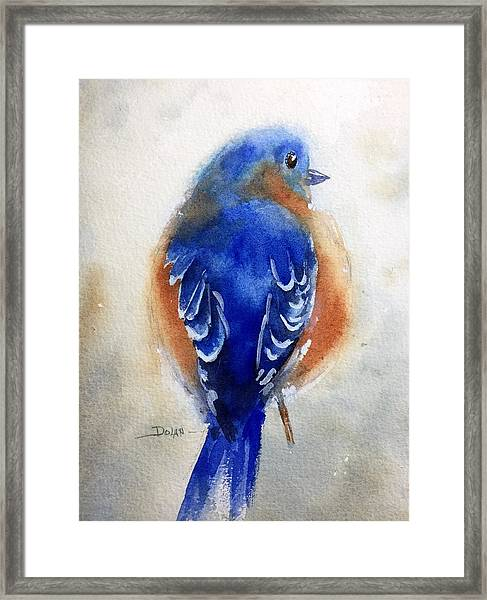 Bluebird #1 Framed Print