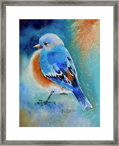 Bluebird #4 Framed Print