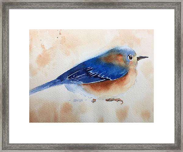 Bluebird #5 Framed Print