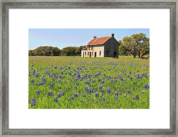 Bluebonnet Field Framed Print