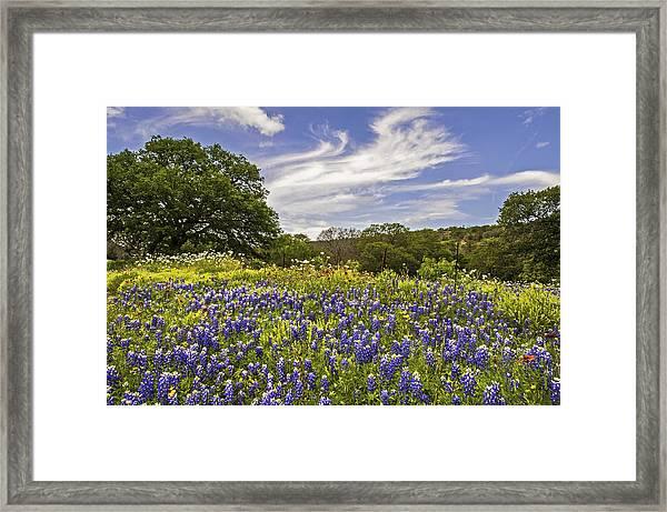 Bluebonnet Spring Framed Print