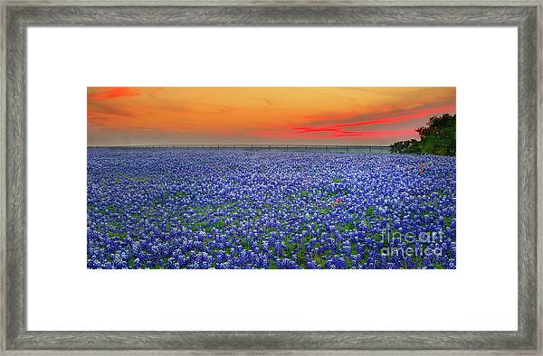 Bluebonnet Sunset Vista - Texas Landscape Framed Print