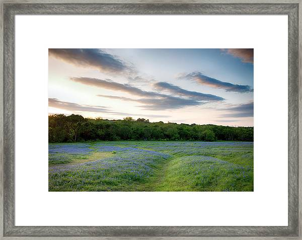 Bluebonnet Trail Ennis Texas 2015 V5 Framed Print