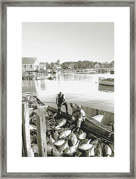 Bluefin Tuna At Barnstable Harbor Framed Print