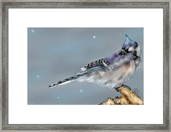 Winter Bluejay Framed Print