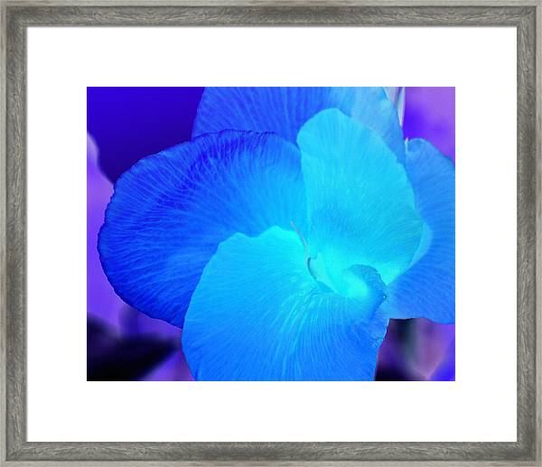 Blurple Flower Framed Print
