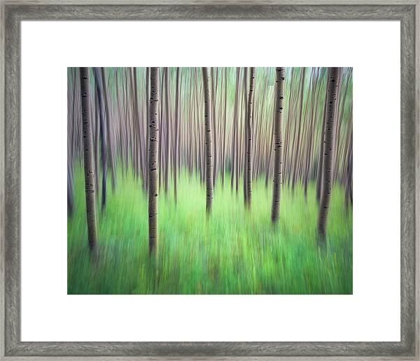 Blurred Aspen Trees Framed Print