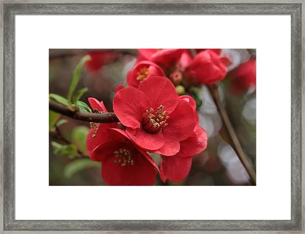 Blushing Blooms Framed Print