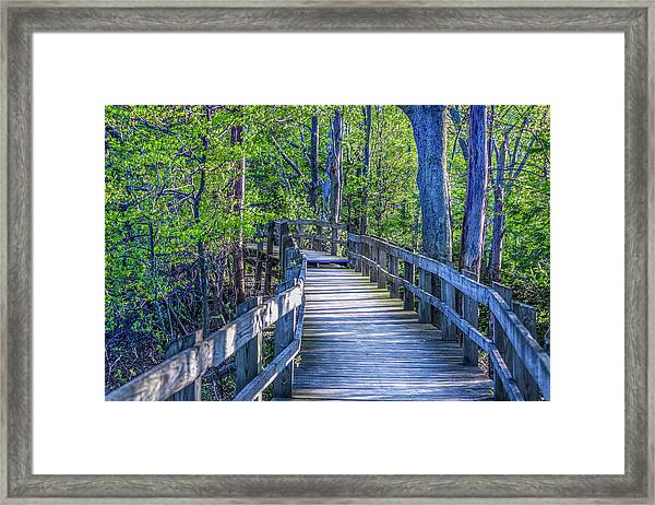 Boardwalk Going Into The Woods Framed Print