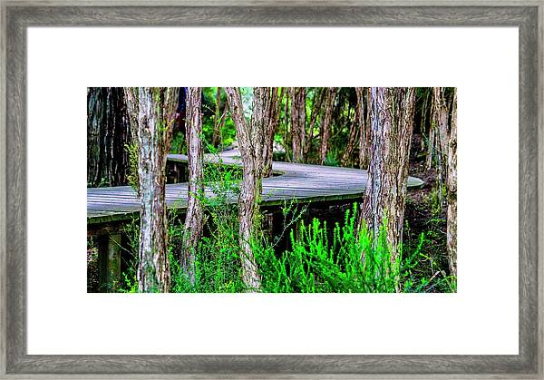 Boardwalk In The Woods Framed Print