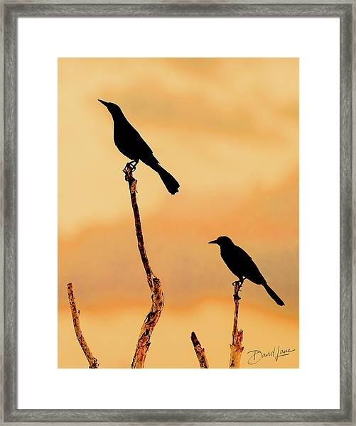 Framed Print featuring the photograph Boat Tailed Grackles by David A Lane