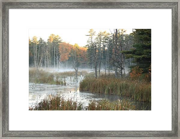 Bog Fog Framed Print