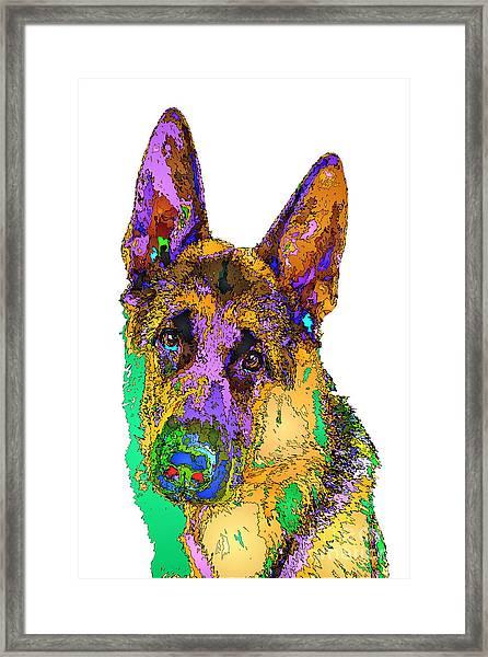 Bogart The Shepherd. Pet Series Framed Print