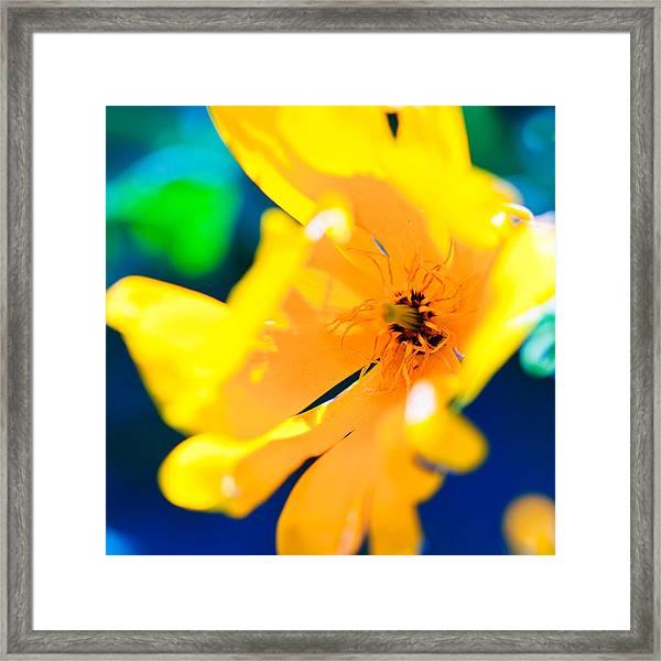 Bold Yellow Framed Print