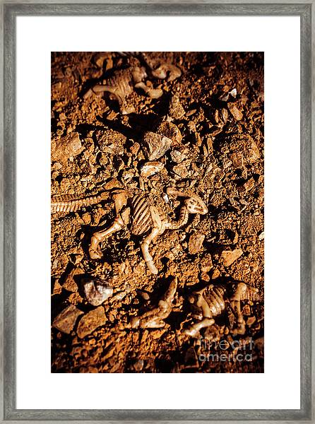 Bones From Ancient Times Framed Print