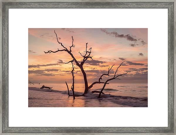 Boneyard Beauty Framed Print by Michael Donahue