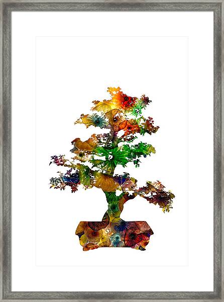 Bonsai Framed Print