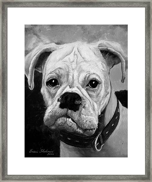 Boo The Boxer Framed Print