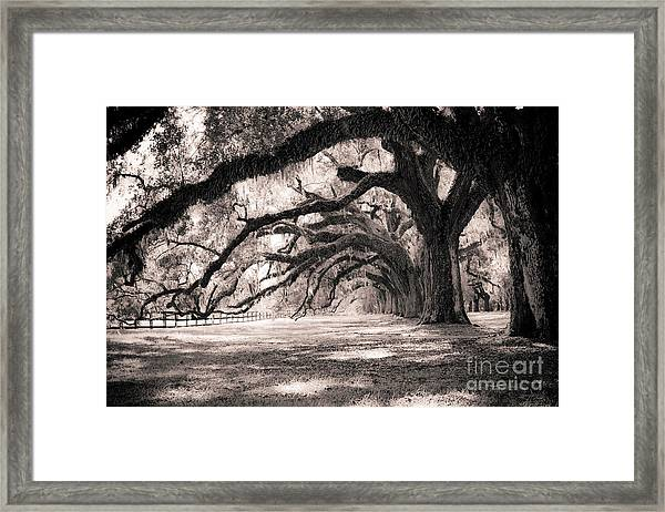Boone Hall Plantation Live Oaks Framed Print