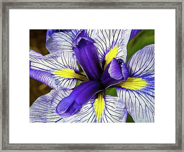 Boothbay Beauty Framed Print