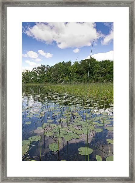 Borden Lake Lily Pads Framed Print