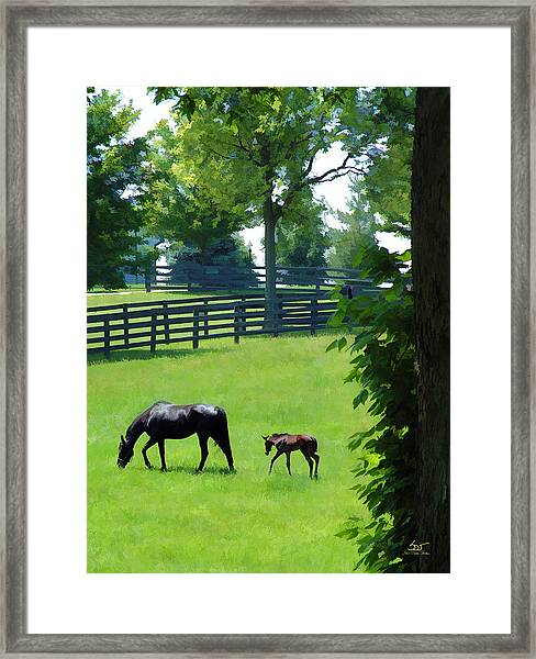 Born In Bluegrass 2 Framed Print
