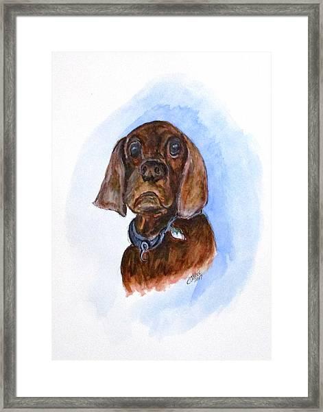 Bosely The Dog Framed Print