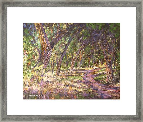 Bosque Light Framed Print by James Roybal