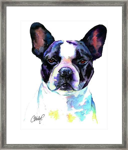 Boston Bulldog Portrait Framed Print