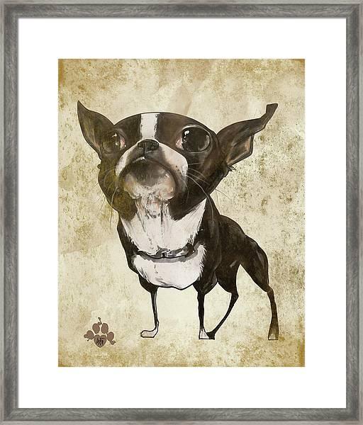 Boston Terrier - Antique Framed Print