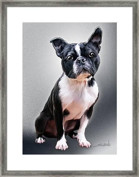 Boston Terrier By Spano Framed Print