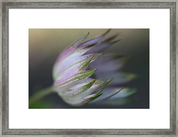 Botanica ... Flight Framed Print