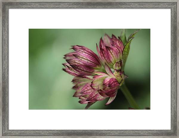 Botanica .. New Beginnings  Framed Print