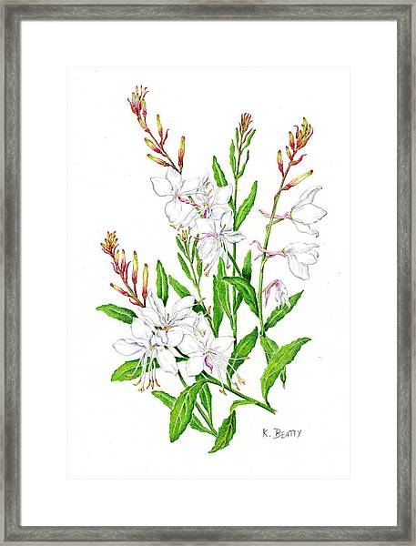 Botanical Illustration Floral Painting Framed Print