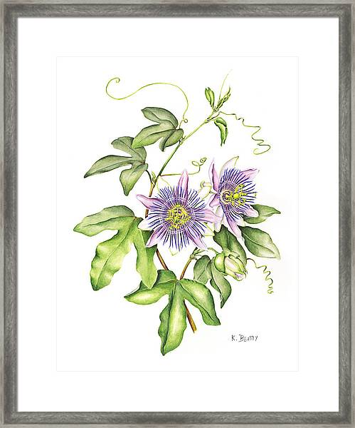 Botanical Illustration Passion Flower Framed Print