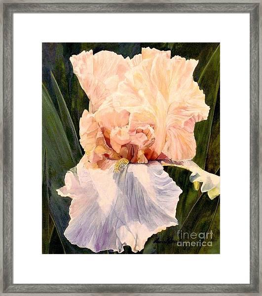 Botanical Peach Iris Framed Print