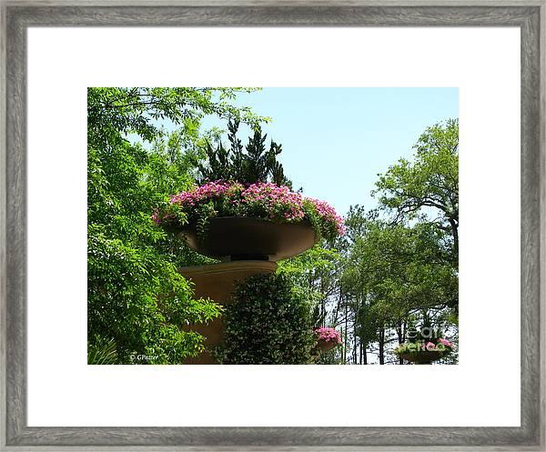 Botanical Sky Framed Print by Greg Patzer