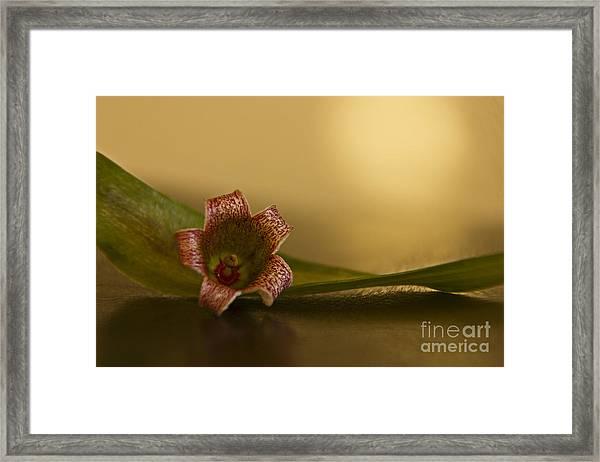 Bottle Tree Flower Framed Print
