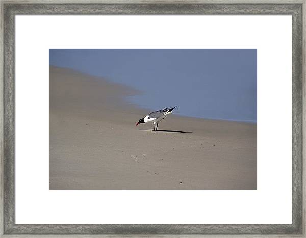Bottoms Up Framed Print by Brendan Reals