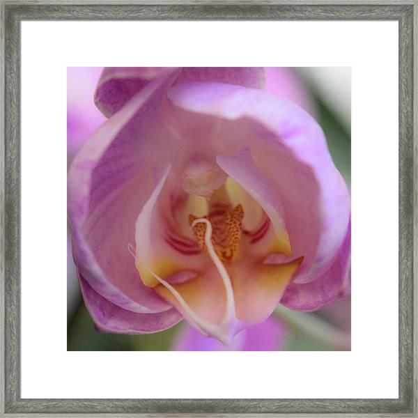 Boudoir Orchid Framed Print