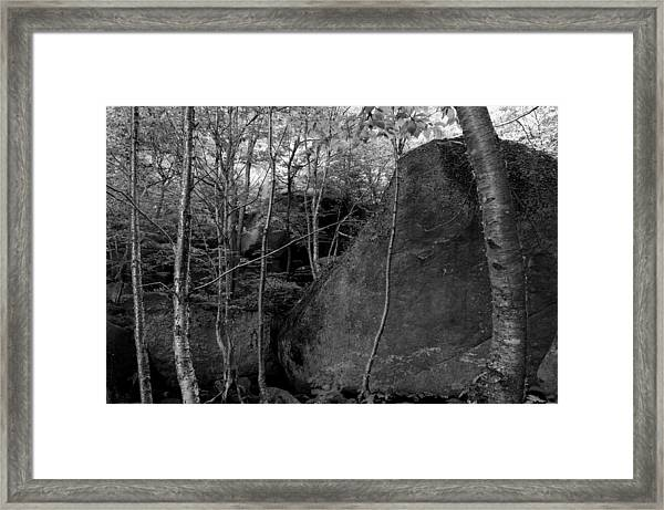 Boulders And Yellow Birch Framed Print
