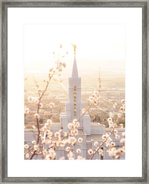 Bountiful Temple Blooms Framed Print