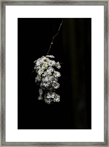 Bouquet Of White Framed Print