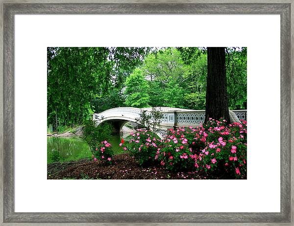 Bow Bridge In Springtime Framed Print