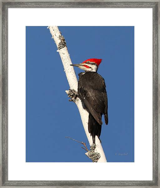 Bracing For Lunch Framed Print
