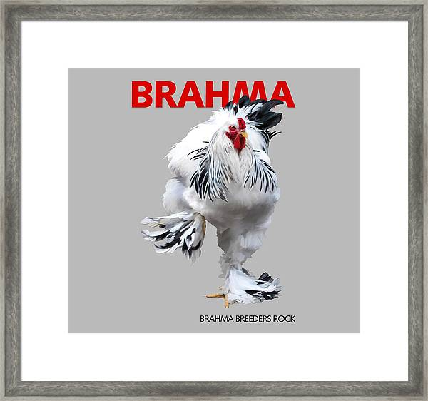 Brahma Breeders Rock Red Framed Print