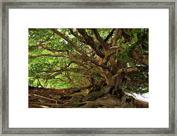 Branches And Roots Framed Print