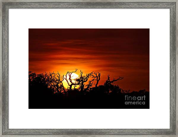 Framed Print featuring the photograph Branches by DJA Images